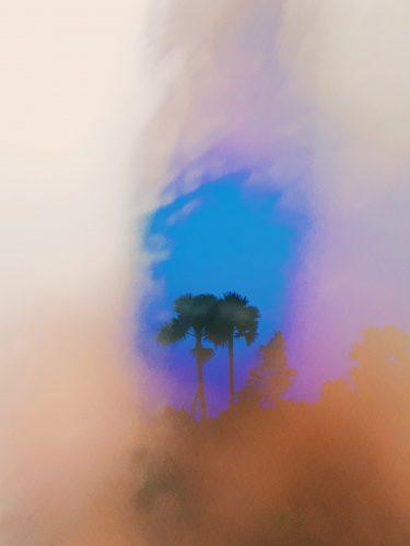 cocoon_navid nooren_decaying nature